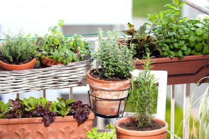 Quelles Plantes Sur Mon Balcon Pour Quel Bienfait